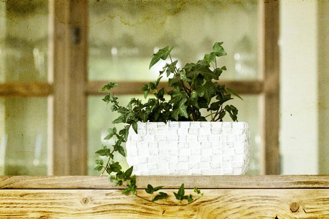 2014年の金運アップに効果的なアイテムは、観葉植物、金魚鉢、貝殻の3つ!