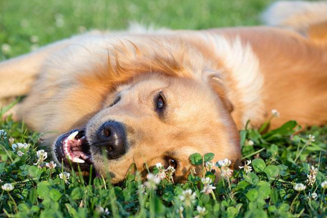 パグは愛され上手、柴犬は一途 愛され方がわかる【わんこ占い】