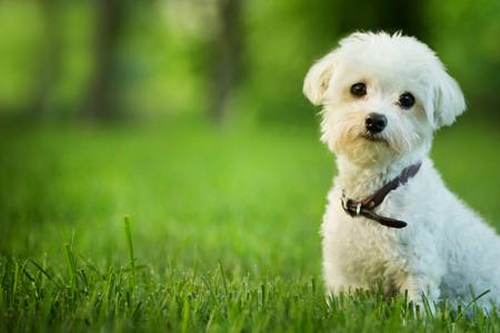イチオシは犬の写真、恋愛運アップは温泉! 風水師が教える2月の開運壁紙