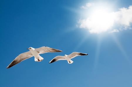 【心理テスト】鳥が教えてくれる、あなたのストレスの原因