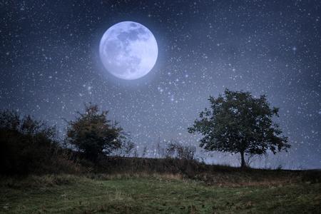 2月の月のリズムは、「自分らしさ」を楽しく追求するのにぴったり