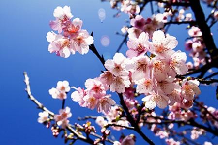 あなたも桜と一緒に開花宣言! この春開花する才能がわかる心理テスト