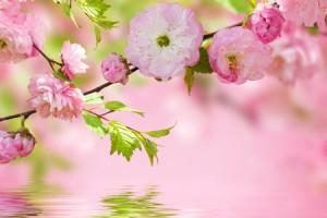 春からの自分を占う【桜診断】満開に咲いている桜は何色?