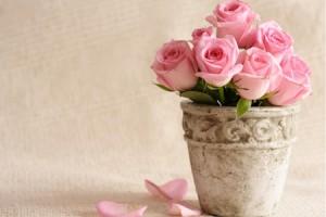 【らくらく風水】ピンクのバラ飾ると結婚運アップ!
