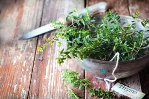 節約ベタは、キッチンの真ん中に観葉植物を置こう!