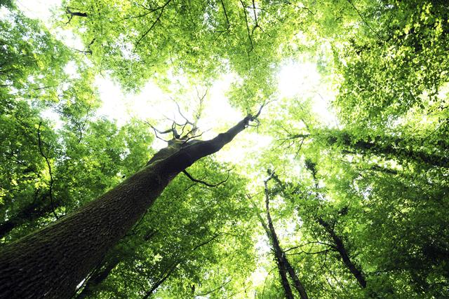 7月は「樹木」の写真で2014年後半の仕切り直し! 風水師オススメの開運待ち受け