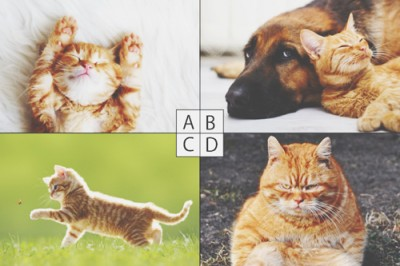 【心理テスト】好きな猫でわかる、あなたのラブリーポイント