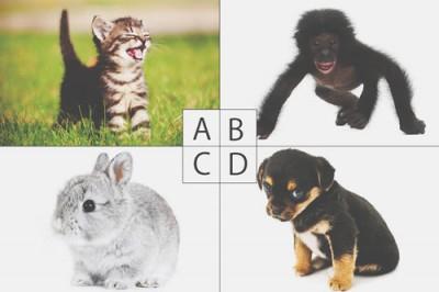 【心理テスト】育たい動物の赤ちゃんでわかる恋の妄想癖