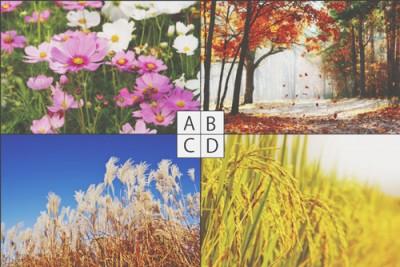 【心理テスト】秋の風景でわかる、飢えていること