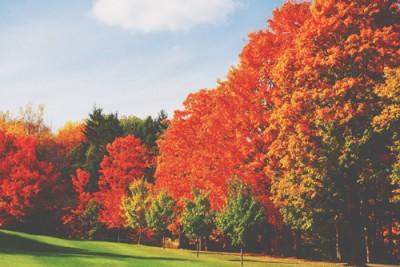 【心理テスト】選んだ紅葉の葉っぱでわかる、あなたが求める男の色気