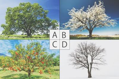 【心理テスト】気になる木でわかるストレスの正体