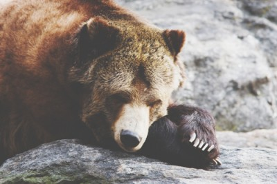 【心理テスト】クマの行動でわかるヒステリー傾向