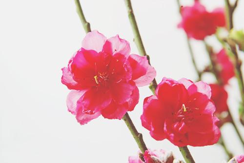 【3月の開運壁紙】恋愛運は「桃の花」、仕事運は「船」の写真で運気アップ!
