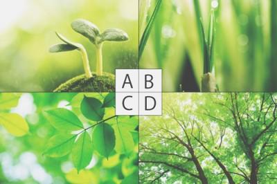 【心理テスト】新緑と聞いてイメージするのは? 答えでわかるあなた若々しさ