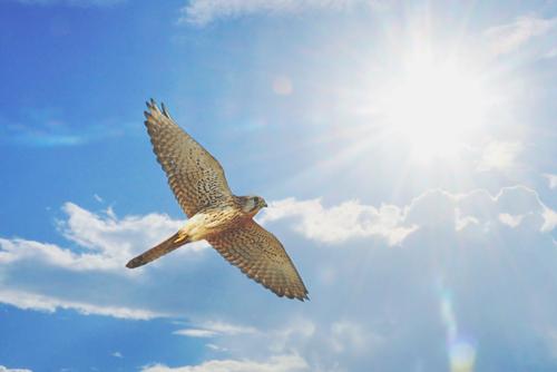 【夢占い】鳥の夢が暗示すること 鳥の巣の夢は近々プロポーズされる予感!