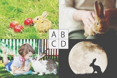あなたの本質と欲求を暴く【心理テスト】「ウサギ」と聞いてイメージするものはどれ?