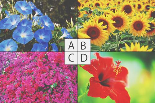 【心理テスト】夏と聞いてイメージする花は? 答えでわかる残りの夏を楽しむ方法