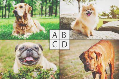 【心理テスト】無人島に連れて行きたい犬は? 答えでわかるあなたが求めている親友