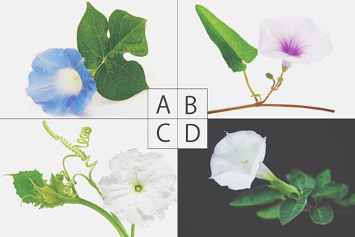 【心理テスト】魔法で花に変えられてしまうとしたら? 答えでわかる恋するあなたの素顔