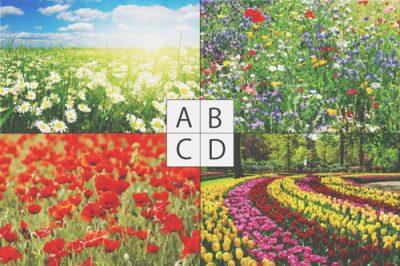 【心理テスト】お花畑と聞いて思い浮かべる情景は? 答えでわかるあなたの妄想力