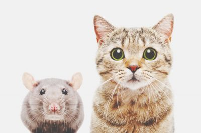 【心理テスト】猫とネズミの関係でわかる年下への対応