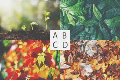 【心理テスト】気分にぴったりの葉っぱはどれ? 答えでわかる今の精神状態