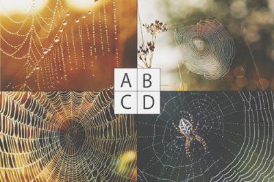【心理テスト】思い浮かべた「クモの巣」でわかるあなたの粘着度