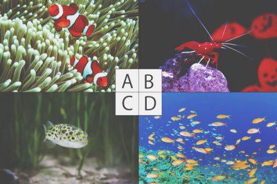 【心理テスト】飼いたい熱帯魚でわかるあなたの理想の相手