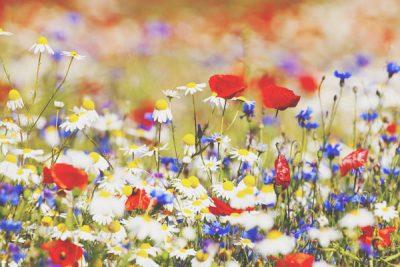 12星座【野に咲く花にたとえると】水瓶座はヘビイチゴ!