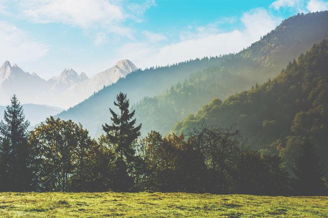 【7月の開運壁紙】恋愛運は「高い山」、仕事運は「屋久杉の森」で運気アップ!