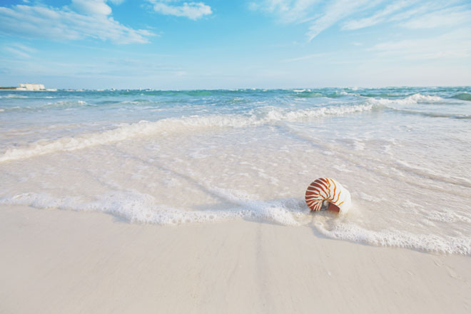 【9月の開運壁紙】恋愛運は「浜辺の白浜」、仕事運は「月見草」で運気アップ!