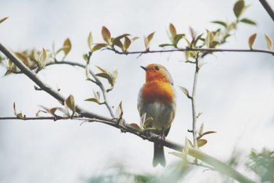 【心理テスト】鳥はどこへ行く? 答えでわかるあなたを苦しめるストレスの正体