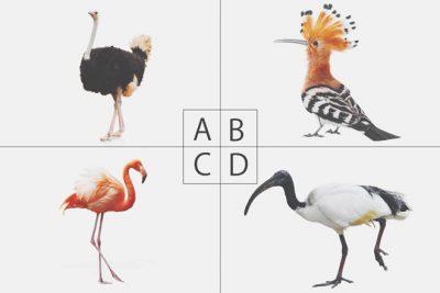 【心理テスト】選んだ鳥でわかる、あなたの恋に対する忠告