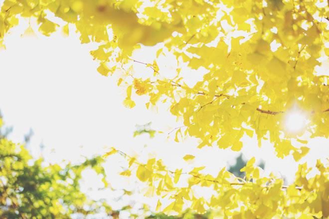 【11月の開運壁紙】恋愛運は「イチョウ」、仕事運は「遺跡」の写真で運気アップ!