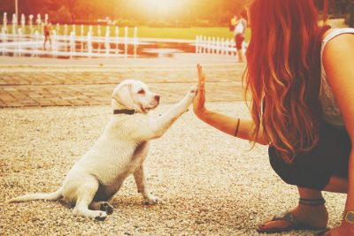 【心理テスト】犬になったあなたの飼い主は? 答えでわかる慕う上司