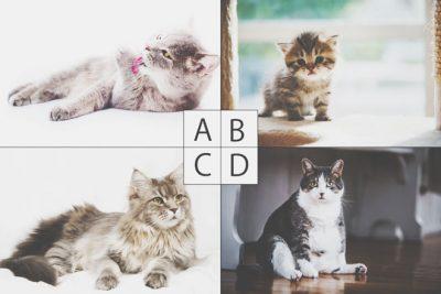 【心理テスト】犯人はどの猫? 答えでわかる判断ミスをする理由