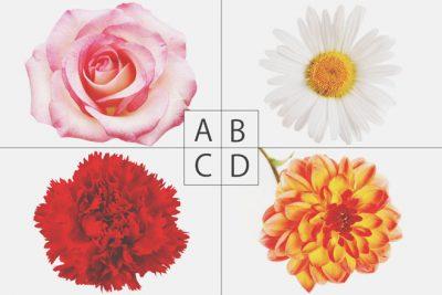 【心理テスト】恋の花占いでわかるあなたを好きになる人