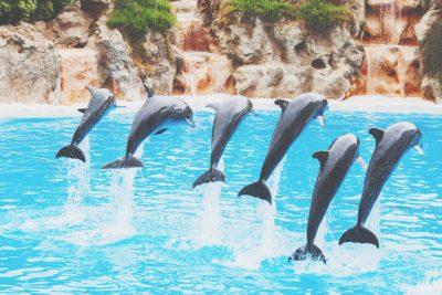 【6月の開運方位】ラッキー方位は「北」、水族館でイルカショーを楽しもう!