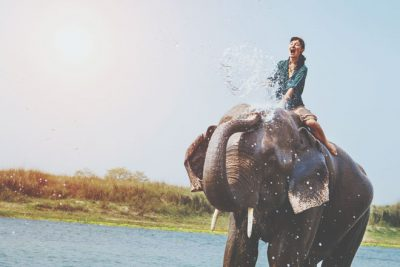 【夢占い】ゾウに乗る夢は財力を手に入れられる予兆! ゾウの夢が暗示すること