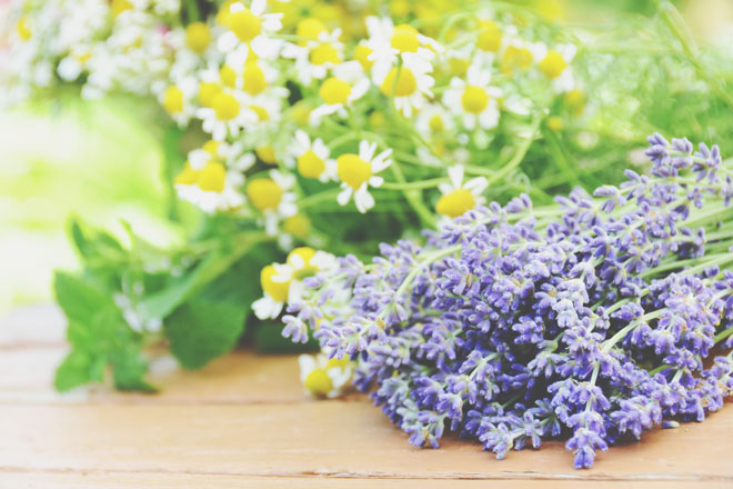 【9月の開運壁紙】恋愛運は「ハーブの花」、金運は「白蛇」の写真で運気アップ!