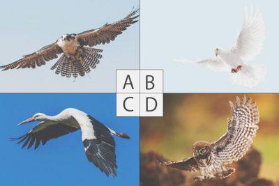 【心理テスト】迷路にあらわれた鳥でわかる、苦境を抜け出す方法