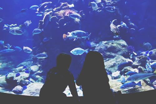 【心理テスト】水族館の魚が教える、あなたのストレスを解き放つメッセージ